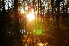 Licht im Wald Stockfotos