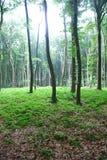 Licht im Wald Stock Photo