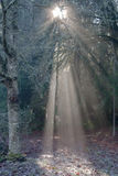 Licht im Wald Lizenzfreies Stockfoto