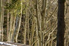 Licht im Winterholz, Italien Lizenzfreies Stockfoto