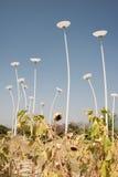 Licht oder Blume Lizenzfreie Stockbilder