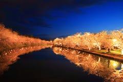 Licht omhoog van kersenboom Royalty-vrije Stock Afbeeldingen