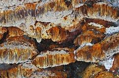 Licht ontvlambare stofpaddestoel Stock Afbeeldingen