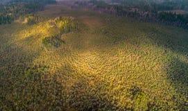 Licht op bos, lucht van hommel stock fotografie