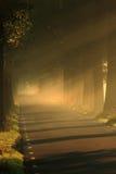 Licht op de weg met bomen Royalty-vrije Stock Afbeeldingen