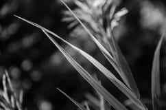 Licht op gras stock foto's
