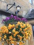 Licht over bloemen over Cotswolds Stock Afbeelding