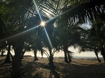 Licht in palmen Royalty-vrije Stock Afbeelding