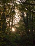 Licht plaatsend het glanzen door de herfst van de aardbladeren van het bomenonduidelijke beeld Royalty-vrije Stock Foto's