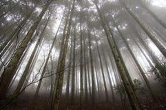 Licht am Rand eines Waldes Stockfotos