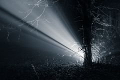 Licht Ray In The Forest royalty-vrije stock foto's