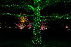 Licht toon in tuin plaatsend in vakantietijd Stock Foto