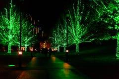 Licht toon in tuin plaatsend in vakantietijd Stock Afbeelding