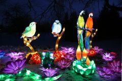 Licht toon van Chinese lantaarns stock afbeelding