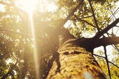 Licht tussen de naden Royalty-vrije Stock Foto