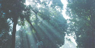 Licht u. Bäume Lizenzfreie Stockfotos