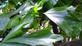 Licht und Schatten auf Palmblättern Stockfotografie