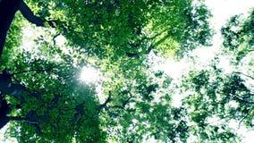 Licht van de zon van bomen stock videobeelden