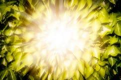 Licht van zon het busting door bladeren van boom. Royalty-vrije Stock Afbeelding