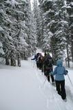 Lichtblauwe parka, sneeuwschoenwandelaars in hout, Stock Afbeeldingen