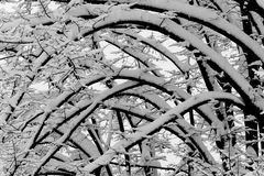Lichtbogen der Zweige umfaßt durch Schnee Stockbilder