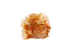 Lichtbruine Aragonite Starburst Stock Foto