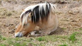 Lichtbruine paardslaap stock foto