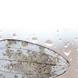Lichtdurchlässige Blatt- und Regentropfen auf Fensterglas Lizenzfreie Stockfotos