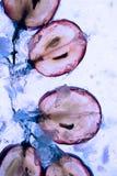 Lichtdurchlässige Scheibe der Frucht der roten Traube Lizenzfreie Stockfotografie