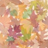 Lichtdurchlässiger farbiger Herbst Stockfoto