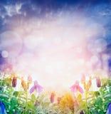 Lichte aardachtergrond met de zomerbloemen over bokeh Stock Fotografie