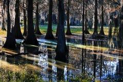 Lichte bezinning in een moerasland Stock Afbeeldingen