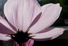 Lichte bloem Stock Fotografie