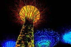Lichte boom Stock Afbeelding