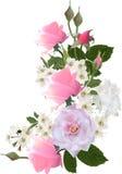 Lichte bos van bloemen met roze rozen Stock Foto