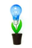 Lichte bulpboom Royalty-vrije Stock Foto