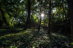 Lichte Contrasten in het Bos royalty-vrije stock foto