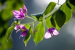 Lichte de bloem en de boombladeren van de rand royalty-vrije stock foto's