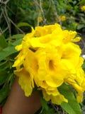 Lichte fotografie van bloem de gele nedium royalty-vrije stock fotografie