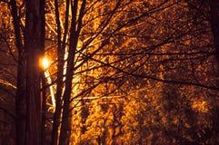 Lichte komst door bomen in de herfst royalty-vrije stock foto's