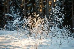 Lichte lichte sneeuw Stock Afbeeldingen