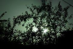 Lichte onderbrekingen door de takken van een boom bij nacht stock afbeeldingen