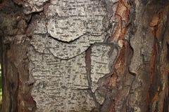 Lichte schors van een boom stock afbeelding