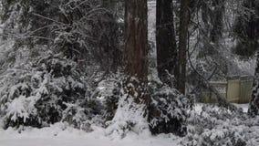 Lichte sneeuwdaling op donker pijnboombos stock video
