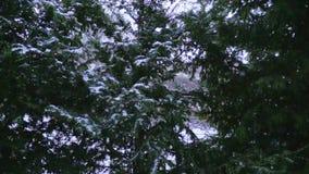 Lichte sneeuwval in langzame motie in de winter in Oostenrijk stock footage