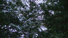 Lichte sneeuwval in langzame motie in de winter in Oostenrijk stock video