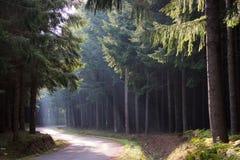 Lichte stralen in het bos Royalty-vrije Stock Foto's