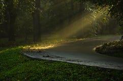 Lichte uitbarstingen op een bosweg na de regen stock fotografie