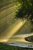 Lichte uitbarstingen op een bosweg na de regen royalty-vrije stock foto's