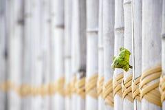 Lichte van de de lijnkabel van het kleurenbamboe houten en gele de close-upachtergrond stock foto's
